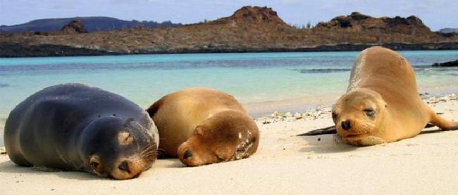 Ecuador - Galapagos a tu Alcance - 6 dias