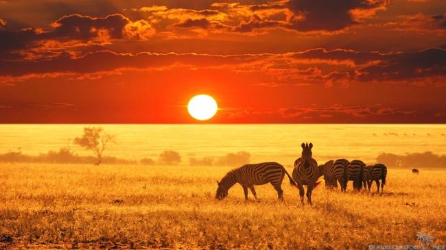 África - De Safari por Kenya - 07 de septiembre ❙ Salidas Grupales 2020 ✩