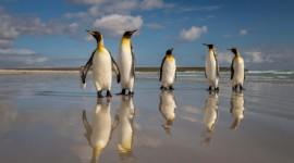 Islas Malvinas Natural | Paquetes 2020