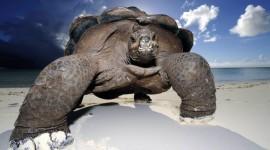 Ecuador - Galápagos a tu alcance | Paquetes 2020
