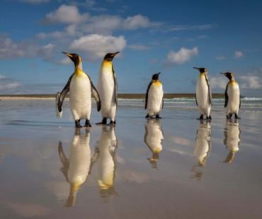 Islas Malvinas Natural